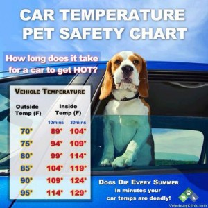 Heat Chart for Animals In Cars